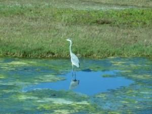Wetlands Photo by Pamela Berns