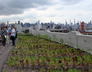 The Brooklyn Grange in LIC, Queens