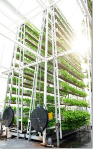 Vertical_Farming_singapore